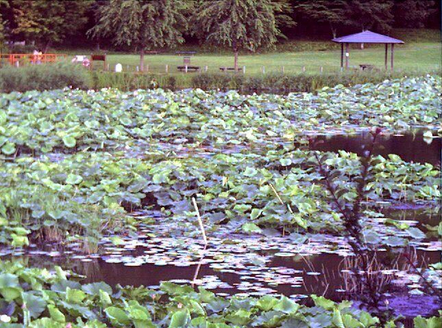 明見湖ライブカメラ(望遠)