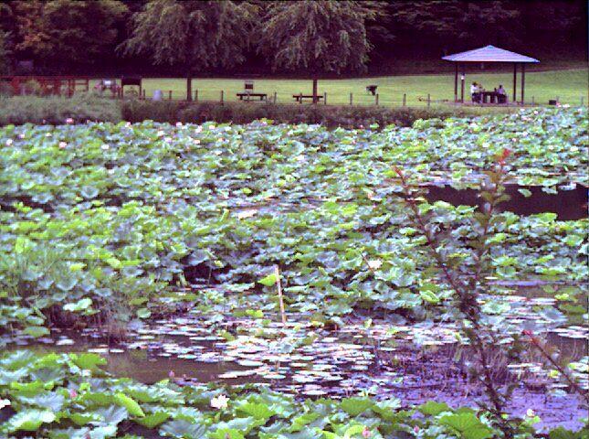 明見湖ライブカメラ-望遠