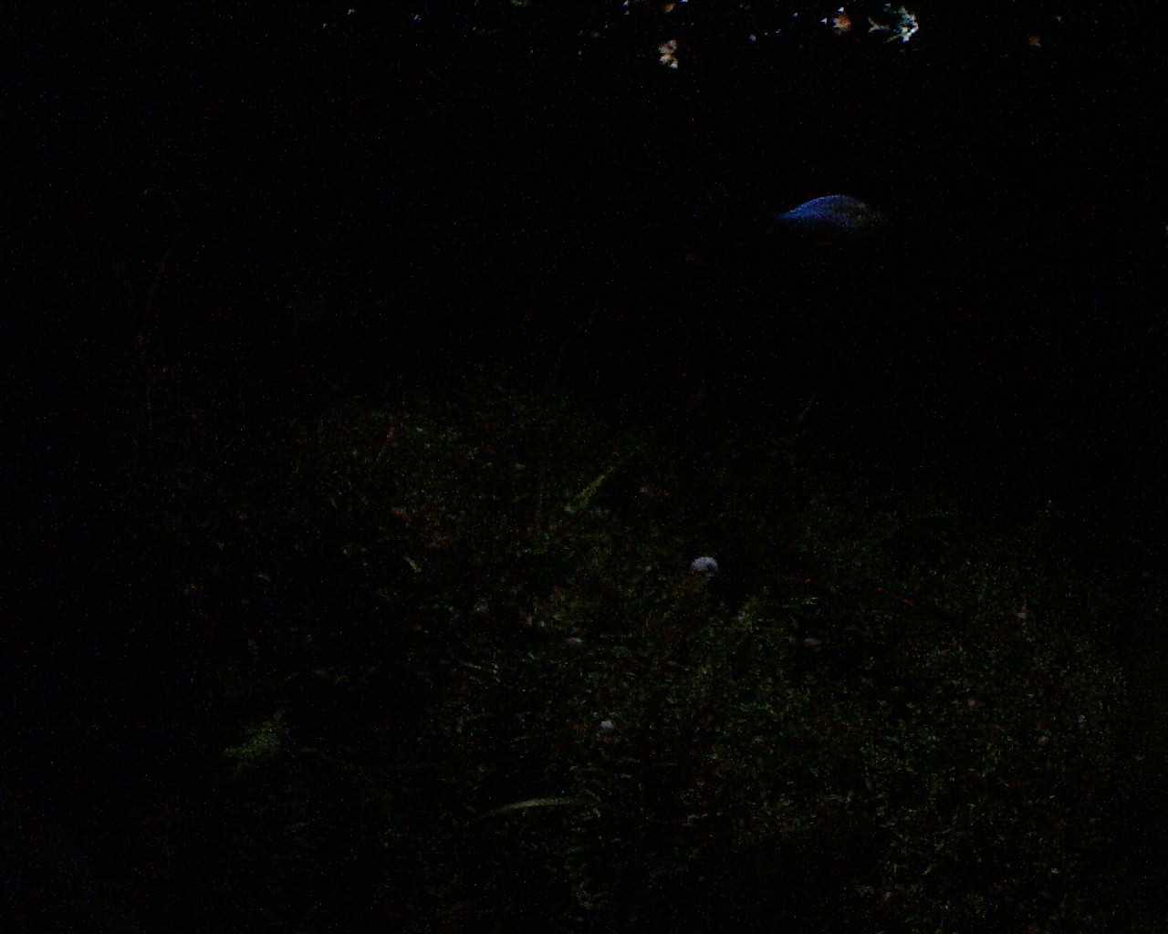 大型水草水槽ライブ